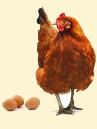 Яйцо и мифы о питании